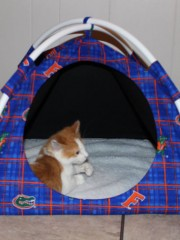 1-Florida-Gators-Cotton-Modern-Cat-or-Dog-Tent